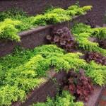 Aiakujundus-garden-20120625_132654