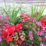 Aiakujundus-garden-20120822_163403